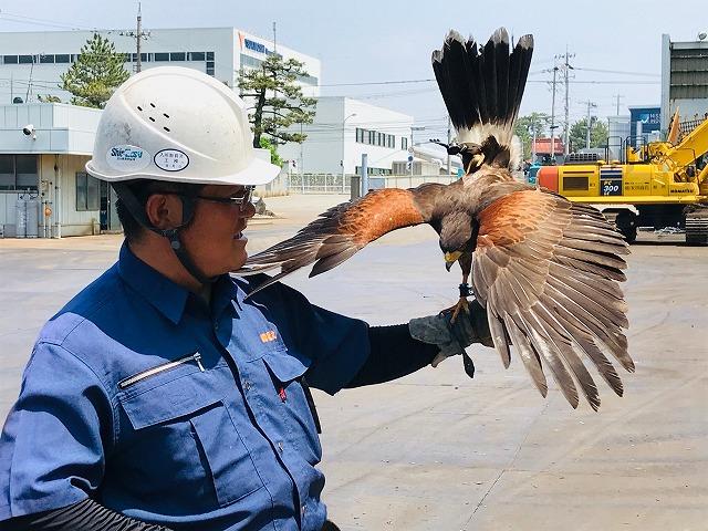 (株)安田商店 鉄スクラップや設備への糞被害防止 鉄と鷹